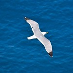 Jonathan Livingston Seagull, I presume?